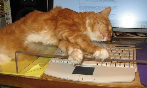 Kitty Keyboard Kover in action
